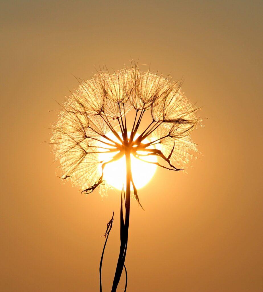 Ilumina tu interior para dar luz a tu exterior